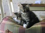 Gidget and Gizmo